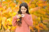 Natural Beauty. Small Girl Wear Autumn Leaves In Natural Hair. Little Child On Natural Landscape. Id poster