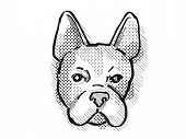 Retro Cartoon Style Drawing Of Head Of A Boston Terrier  , A Domestic Dog Or Canine Breed On Isolate poster