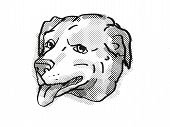Retro Cartoon Style Drawing Of Head Of An American Pugabull  , A Domestic Dog Or Canine Breed On Iso poster