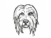Retro Cartoon Style Drawing Of Head Of A Bearded Collie  , A Domestic Dog Or Canine Breed On Isolate poster