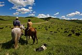 foto of cattle dog  - Two cowboys and there dog working with a large herd of cattle - JPG