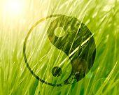 stock photo of karma  - yin yang sign on a natural green background - JPG