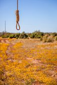 picture of hangmans noose  - A rual shot of a field of yellow flowers with a hangmans noose in the foreground - JPG