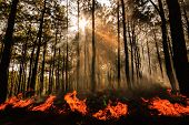 stock photo of deforestation  - wildfire or fire at Mae Hong sorn Thailand - JPG