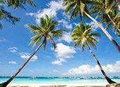 stock photo of tropical island  - Palms on tropical beach Philippines Boracay island  - JPG