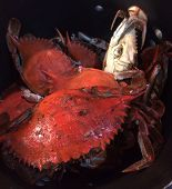pic of cooked blue crab  - Beautifully boil blue crabs for a nice crab boil - JPG