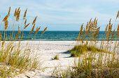 picture of alabama  - A scene on the Gulf Coast of Alabama - JPG