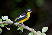 picture of jungle birds  - Yellow - JPG