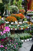 picture of flower shop  - Street flower shop with colourful flowers - JPG