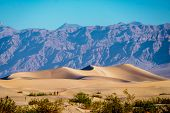 image of mesquite  - Mesquite flat sand dunes at sunrise - JPG