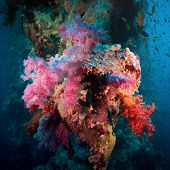 pic of aquatic animal  - Colorful underwater offshore rocky reef with coral and sponges and small tropical fish swimming by in a blue ocean - JPG