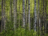 stock photo of spring-weather  - Closeup of trees in the forest in the spring - JPG