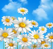 stock photo of daisy flower  - White daisy chamomile flowers on blue sunny summer sky background vector illustration - JPG