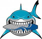 stock photo of great white shark  - Vector illustration - JPG