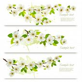 stock photo of tree-flower  - Three spring banners with blossoming tree brunch with spring flowers - JPG
