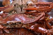 pic of crab  - Boiled Crabs, Ready to cook for Thai Crab Curry