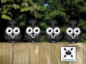picture of bird fence  - Comical bird assembly point perched on a timber garden fence against a foliage background - JPG