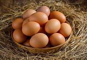 picture of dry grass  - egg in a basket on the dried grass - JPG