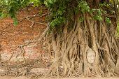 stock photo of gautama buddha  - Stone head of Buddha nestled in the embrace of bodhi tree - JPG
