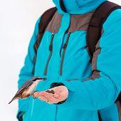 pic of feeding  - Feeding hungry birds in the winter - JPG