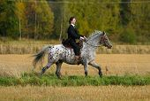 pic of appaloosa  - A man in tuxedo riding appaloosa mare with western tack - JPG