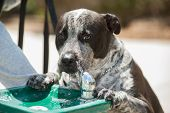 stock photo of fountains  - Thirsty dog slobbering while drinking from fountain - JPG