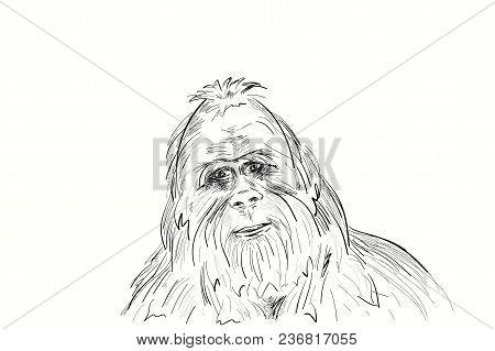 Portrait Of The Legendary Bigfoot