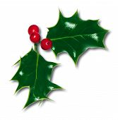 image of holly  - holly with berries - JPG