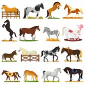 Cartoon Horse Vector Cute Animal Of Horse-breeding Or Equestrian And Horsey Or Equine Stallion Illus poster