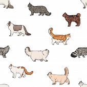 Seamless Pattern With Domestic Cats Of Various Breeds Hand Drawn On White Background. Backdrop With  poster
