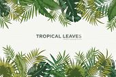 Horizontal Background With Green Leaves Of Tropical Palm Tree, Banana And Monstera. Elegant Backdrop poster