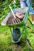 stock photo of humus  - gardener with a wheelbarrow full of humus in the garden - JPG
