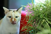 Cat Eating Fresh Green Grass,cat Licking Its Lips After Eating Fresh Green Grass,cat Grass. Useful F poster