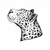 Leopard Portrait Of Exotic Animal Isolated Vector Illustration Sketch. Monochrome Profile Of Panther poster