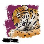 Jaguar Portrait Closeup Of Animal. Panthera Once Type Of Carnivore Fauna. Wildlife Of South America, poster