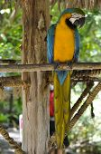 image of polly  - Colorful Macaw Parrot sitting on the tree branch - JPG