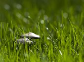 Mushrooms in Green Grass