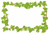 picture of ivy vine  - vector illustration of a frame from ivy vines with leaves - JPG