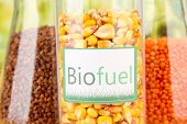 pic of ethanol  - Conceptual photo of bio fuel - JPG