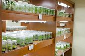 pic of vitro  - plant tissue culture in the laboratory - JPG