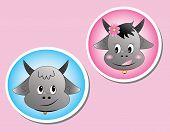 foto of female buffalo  - The buffalo head on a pink background - JPG