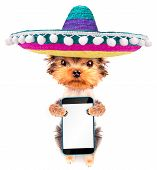 foto of mexican-dog  - cute puppy dog wearing a mexican hat holding phone with empty white screen - JPG
