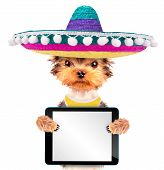 stock photo of mexican-dog  - cute puppy dog wearing a mexican hat holding blank tablet pc - JPG