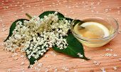 stock photo of elderberry  - Elderberry fresh flowers on a wooden table
