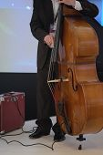 stock photo of double-bass  - image of a man playing on a double - JPG
