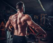 image of arm muscle  - Muscled male model showing his back - JPG