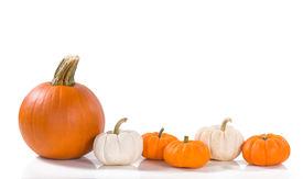 image of pumpkin pie  - Pie pumpkin and mini pumpkins in a row against white background - JPG