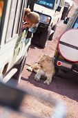 picture of  jeep  - Blonde female tourist photographing wild lioness resting in a shade of safari jeep - JPG