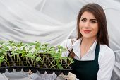 stock photo of greenhouse  - Young woman working in a greenhouse holding a crate with seedlings in a greenhouse - JPG