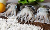 stock photo of sucker-fish  - Closeup on fresh cuttlefish with rice - JPG